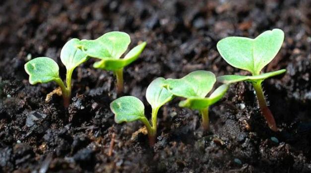 Листни торове за осигуряване на бърз растеж при растенията